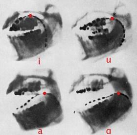 fonoloji