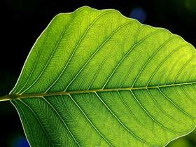 fotosentez