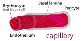 kılcal damar