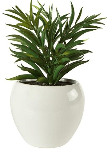 Saksılı dekoratif çiçek örneği