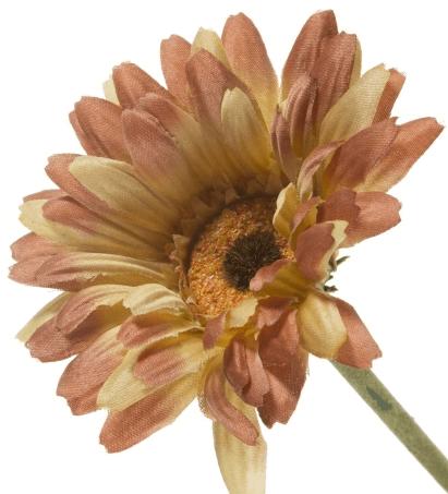 Tek dal çiçek örneği