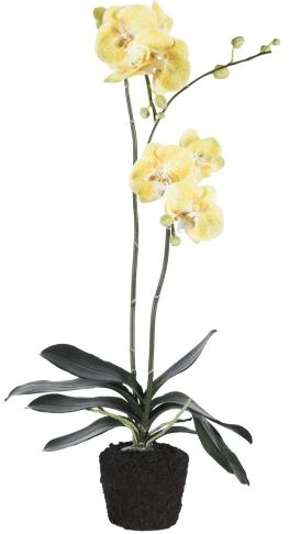 Saksılı çiçek örneği