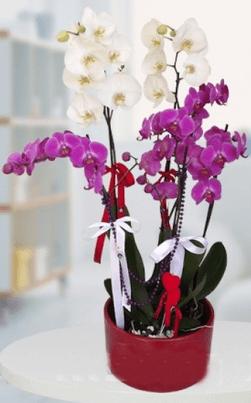 Yeni iş - Hayırlı olsun çiçeği örneği