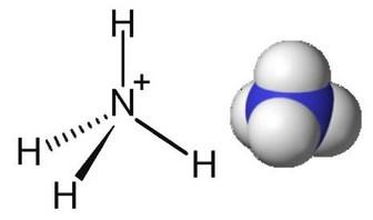 amonyum