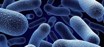 bakteriyoloji