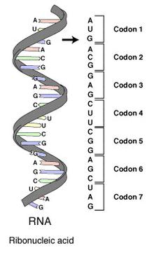 genetik kod