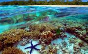 mercan denizi